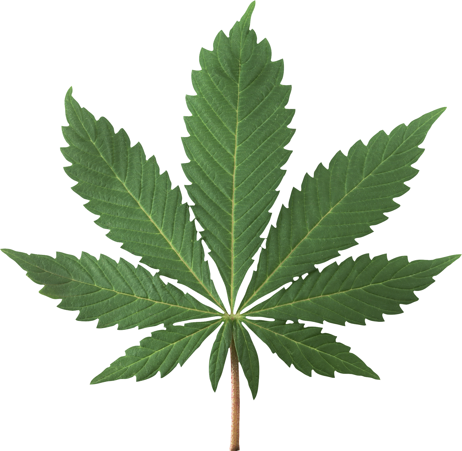 Cannabis flower png. Images free download