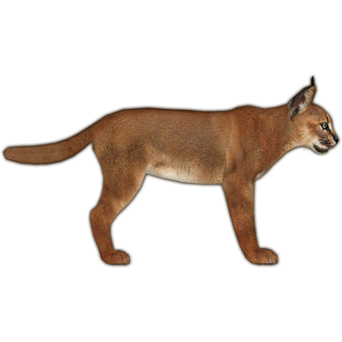 caracal animal png