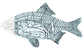 Inscape drawing fish. Circles peter s website