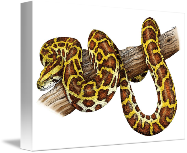 Carpet drawing burmese python. By roger hall share