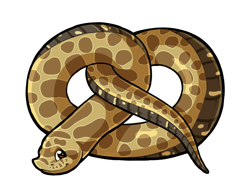 Carpet drawing burmese python. Pretzel the hognose by