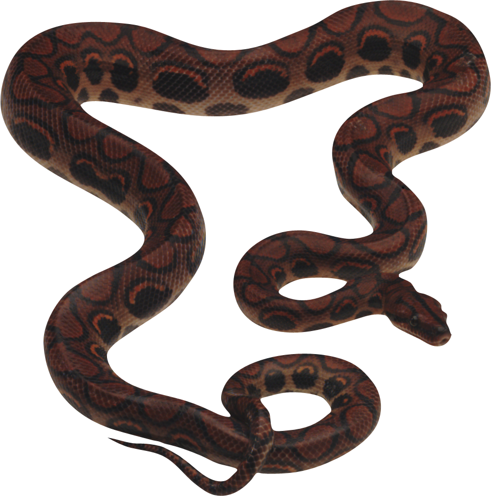 Carpet drawing python snake. Png animal pinterest and