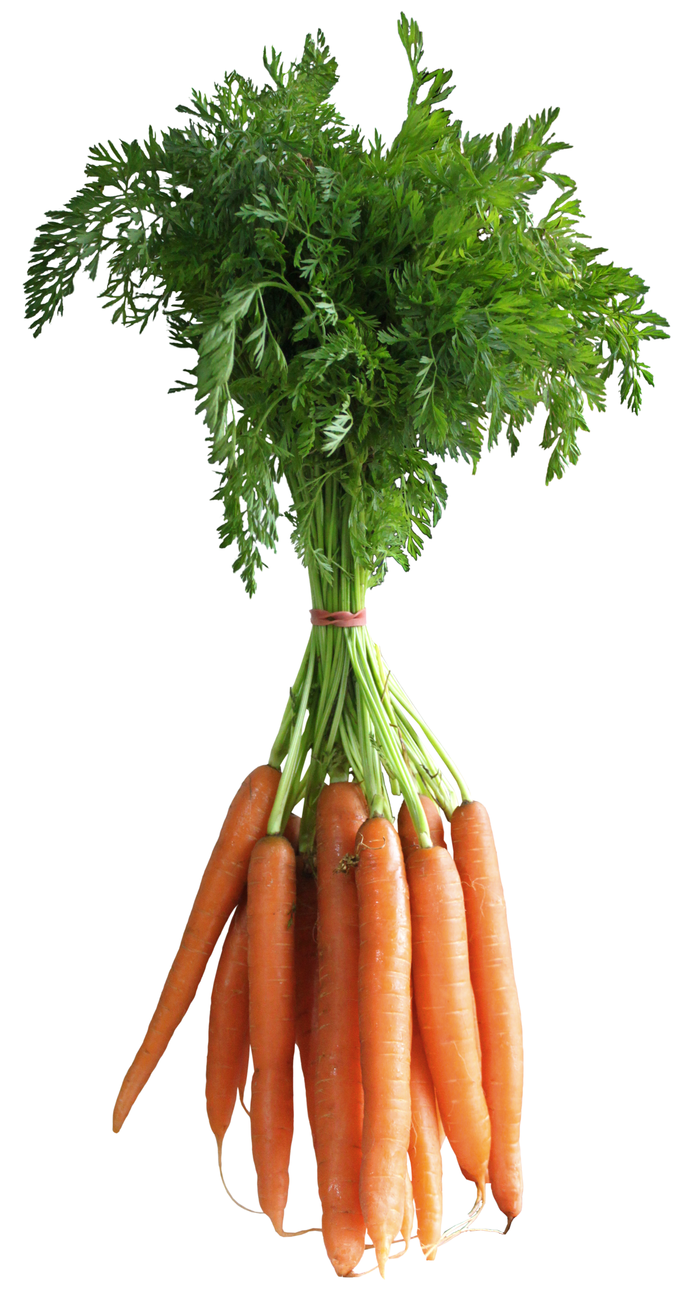 Carrot plant png. Carrots clipart picture gallery