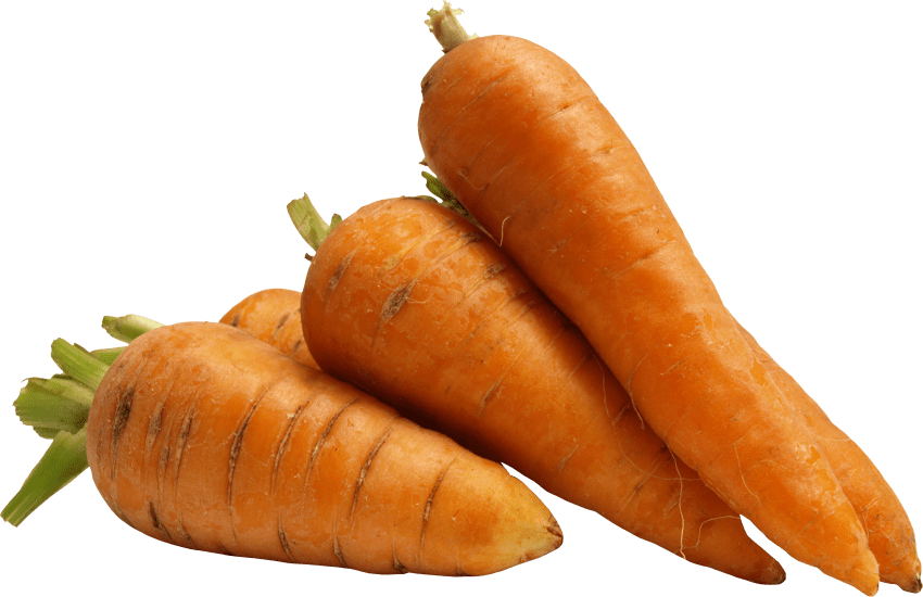 Carrot png. Free images toppng transparent