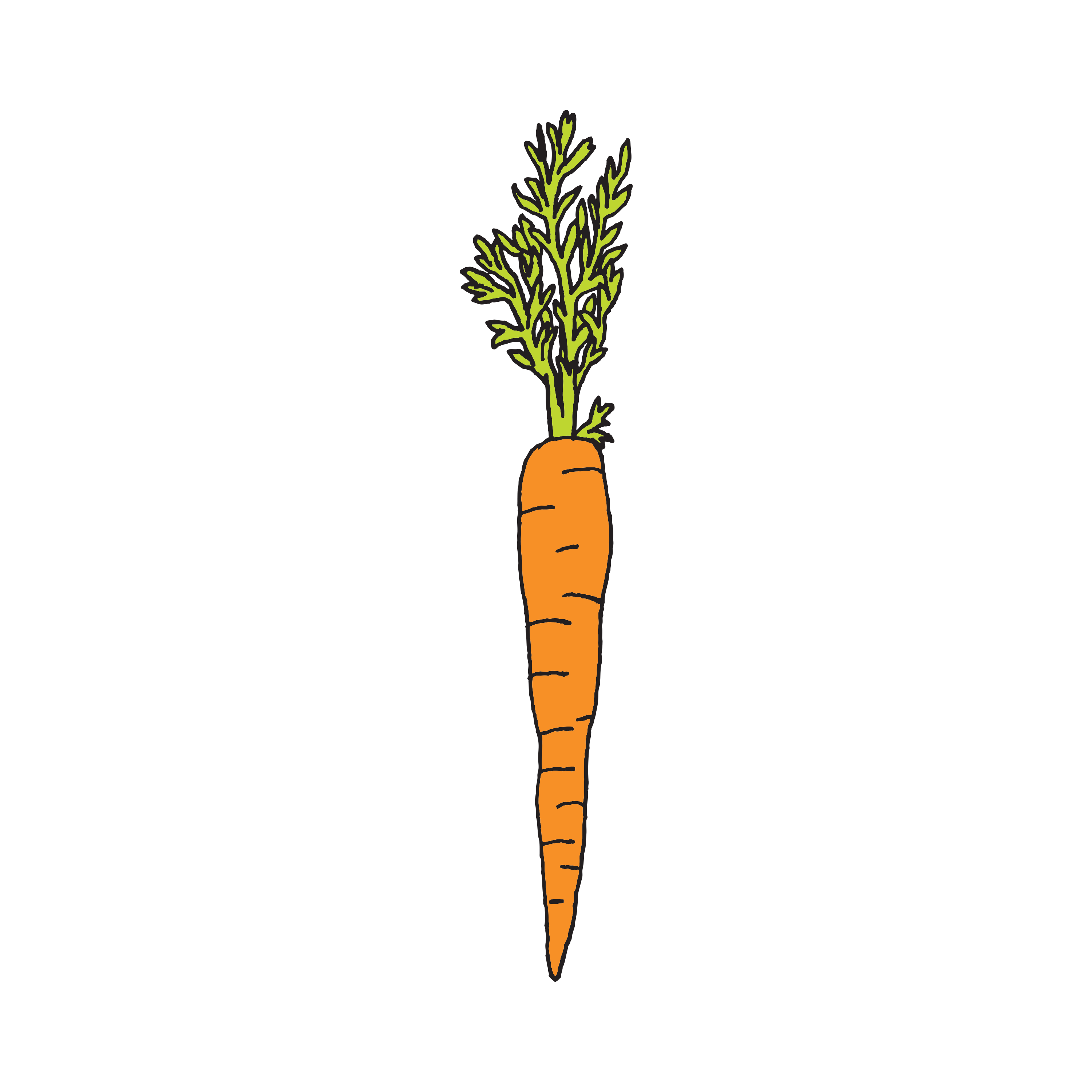 Drawing vegetable diet. Carrot by julia rothman