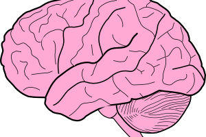 Cartoon brain png. Boy image related wallpapers