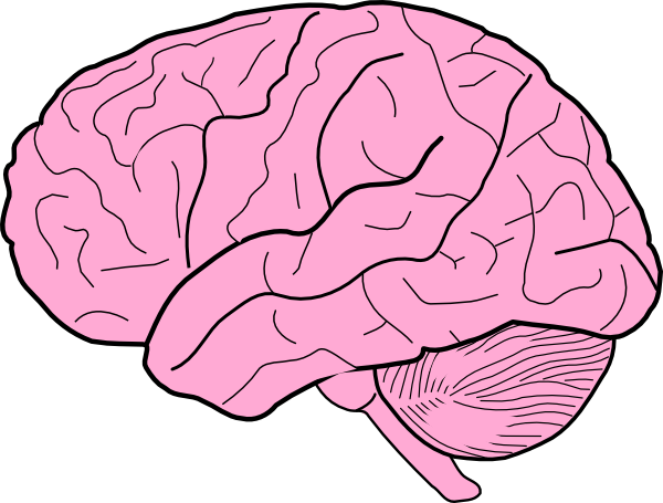 Smart clipart brain clipart. Cartoon