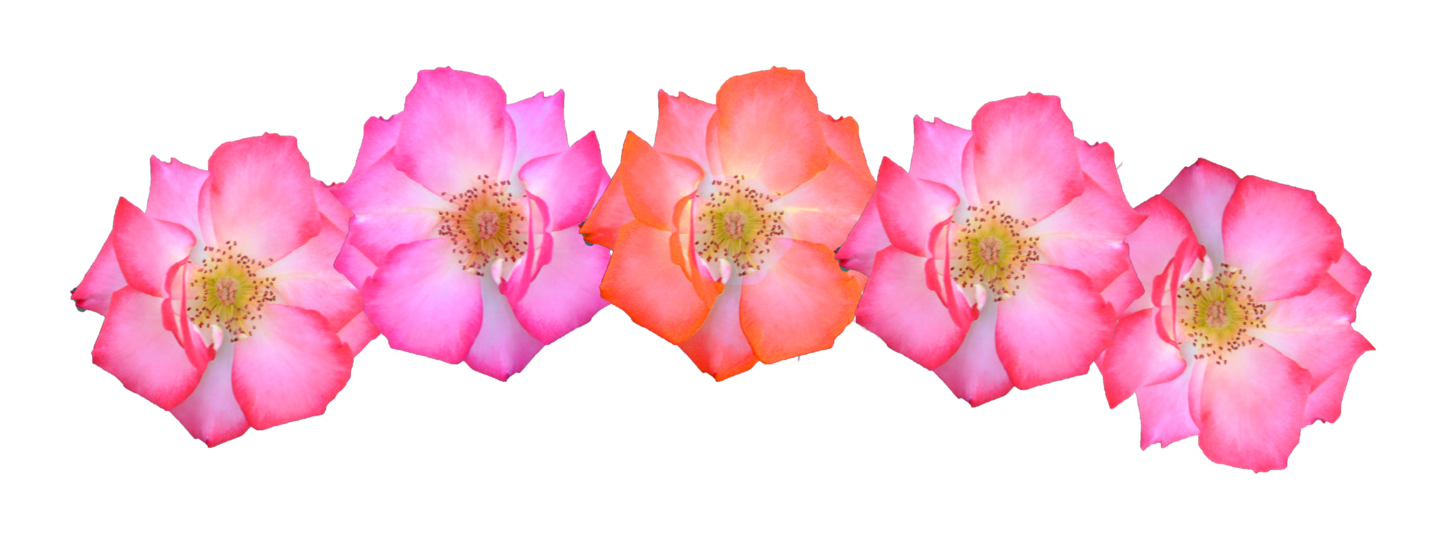 pink flower crown png