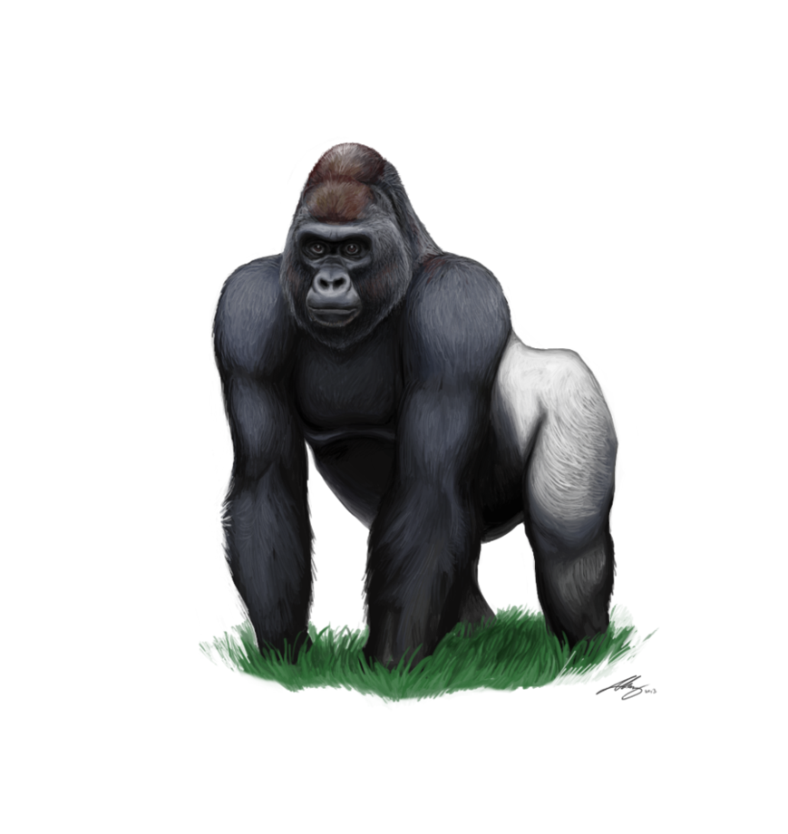 Png transparent images all. Drawing gorilla silverback png library stock