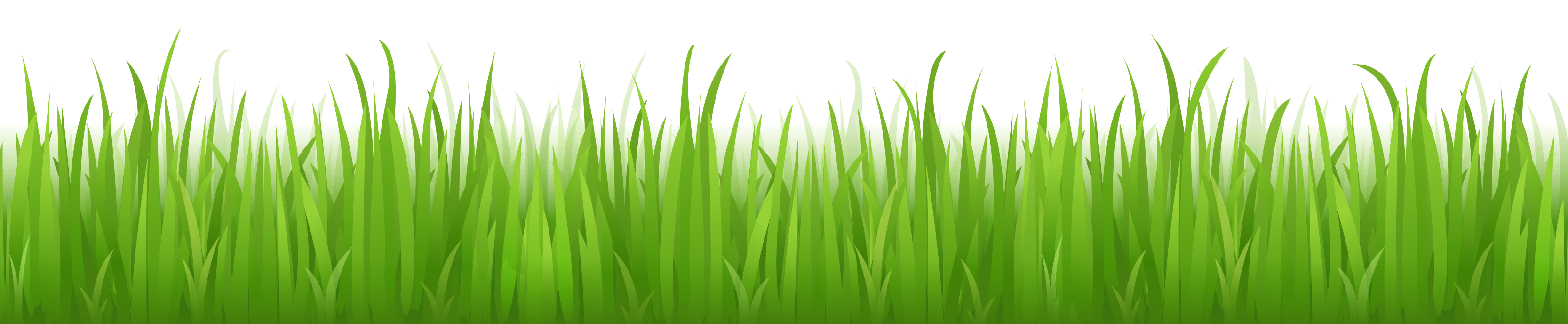 Cartoon grass png. Images pictures image green