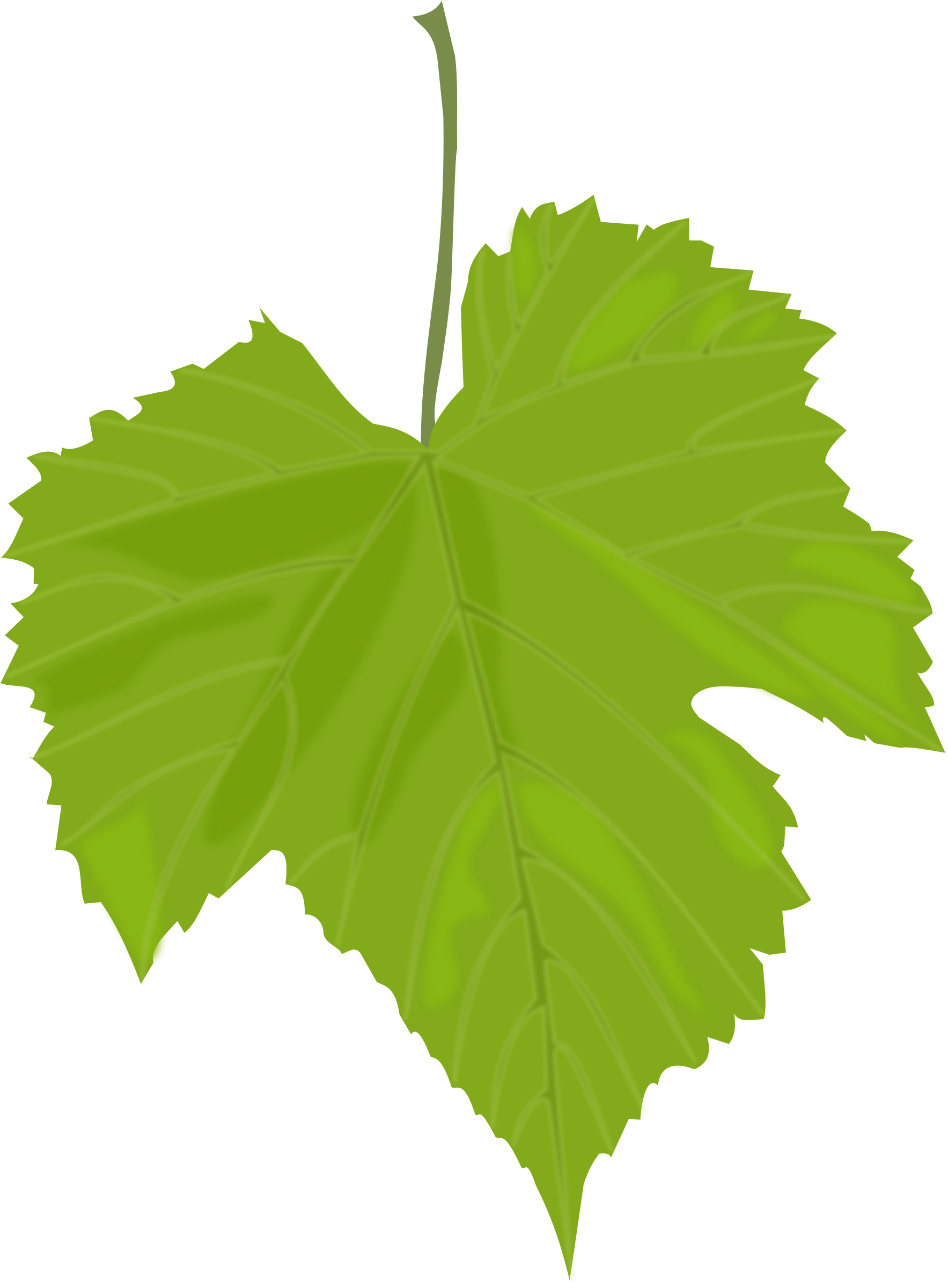 Green leaves png. Image purepng free transparent