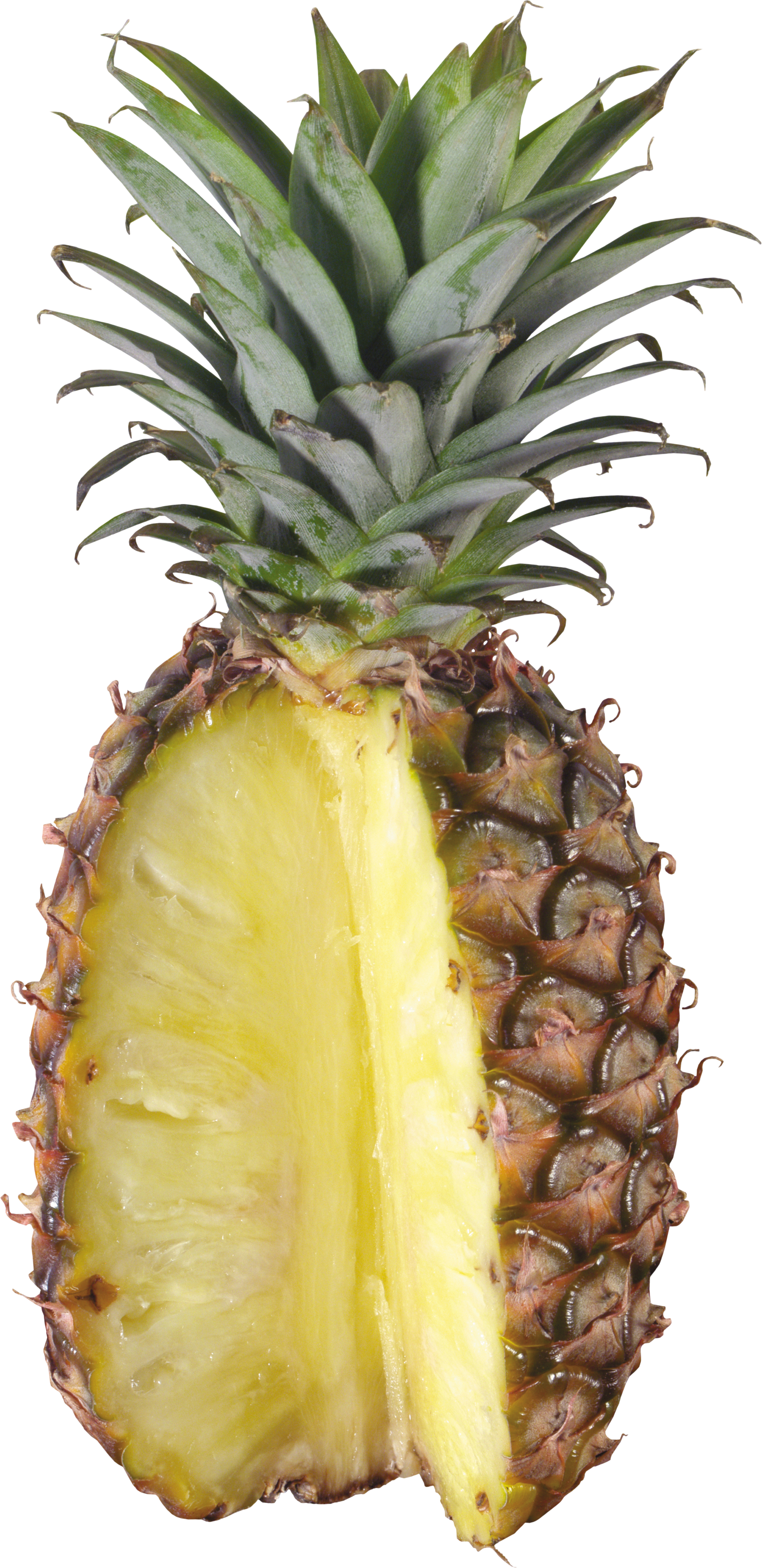Cartoon pineapple png. Thirty one isolated stock