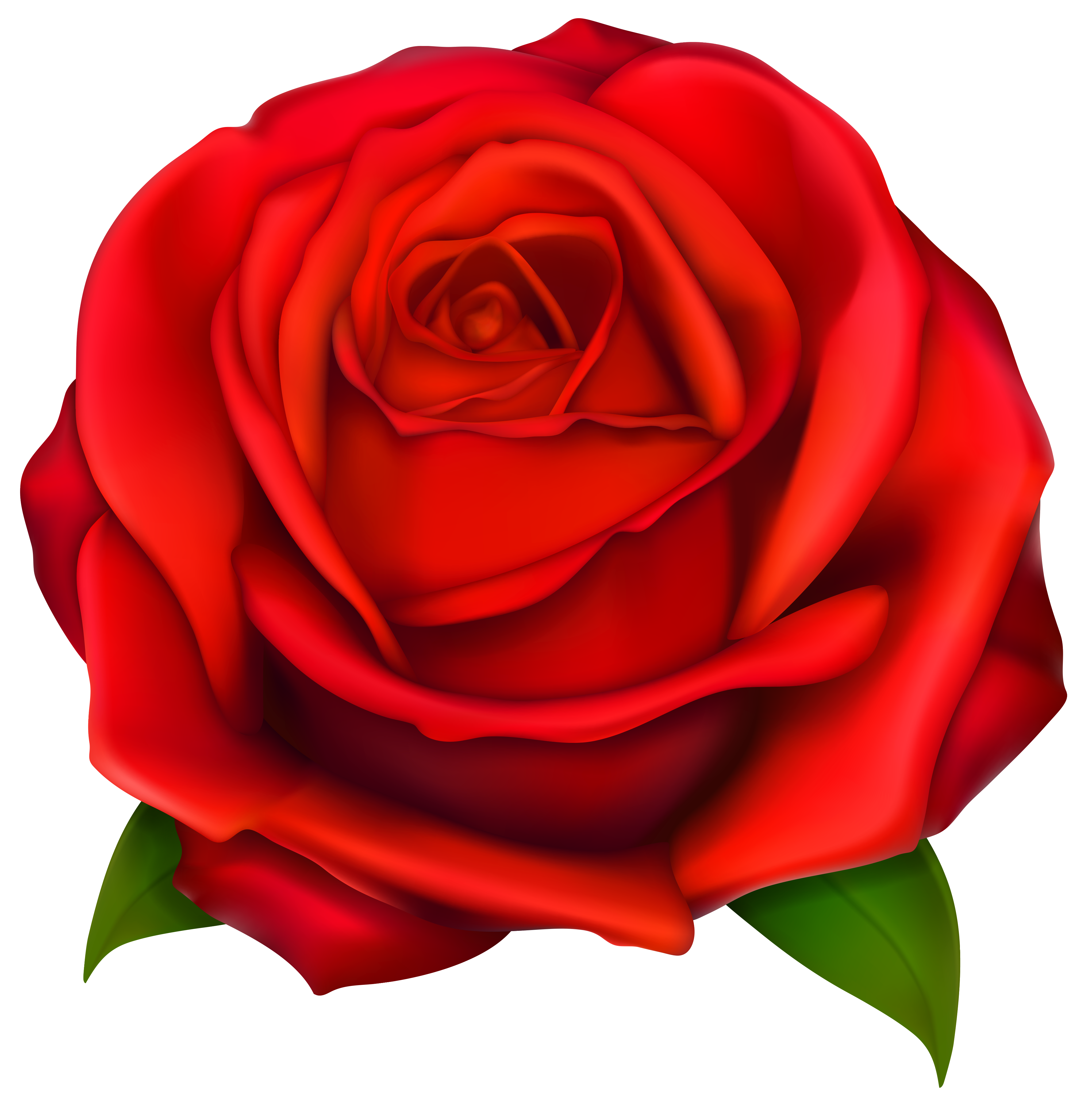 Cartoon rose png. Transparent red clipart gallery