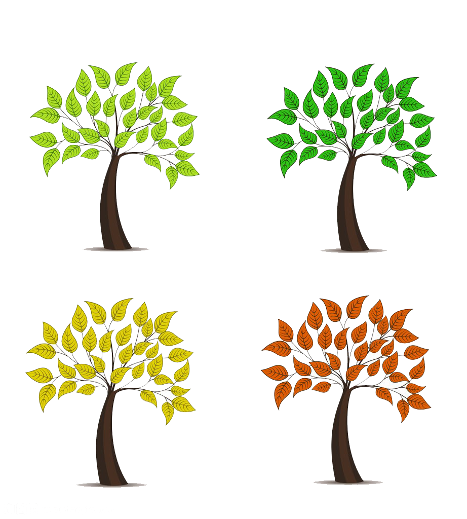 Cartoon tree branch png. Photography illustration spring and