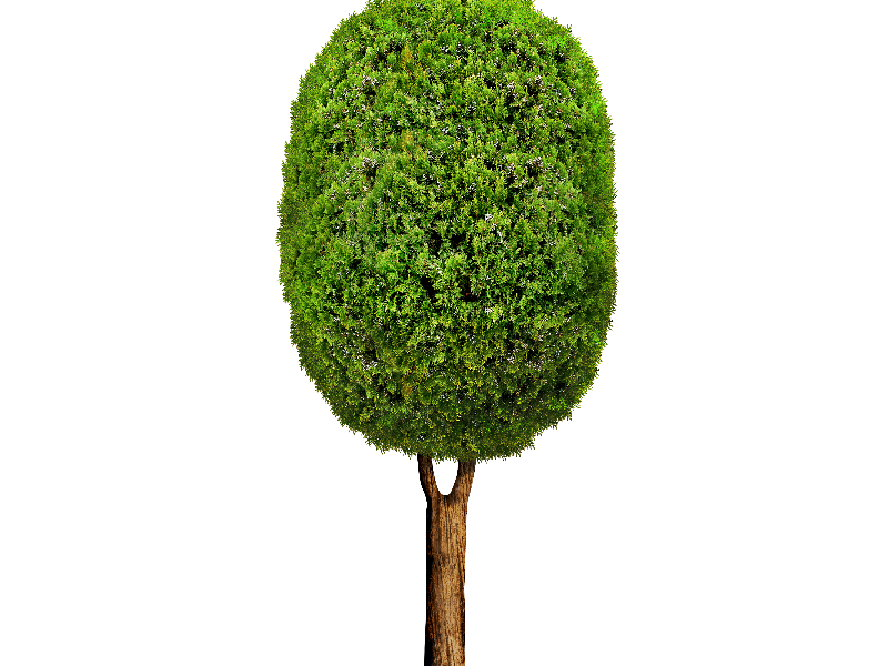 Cartoon tree png. Isolated objects textures for
