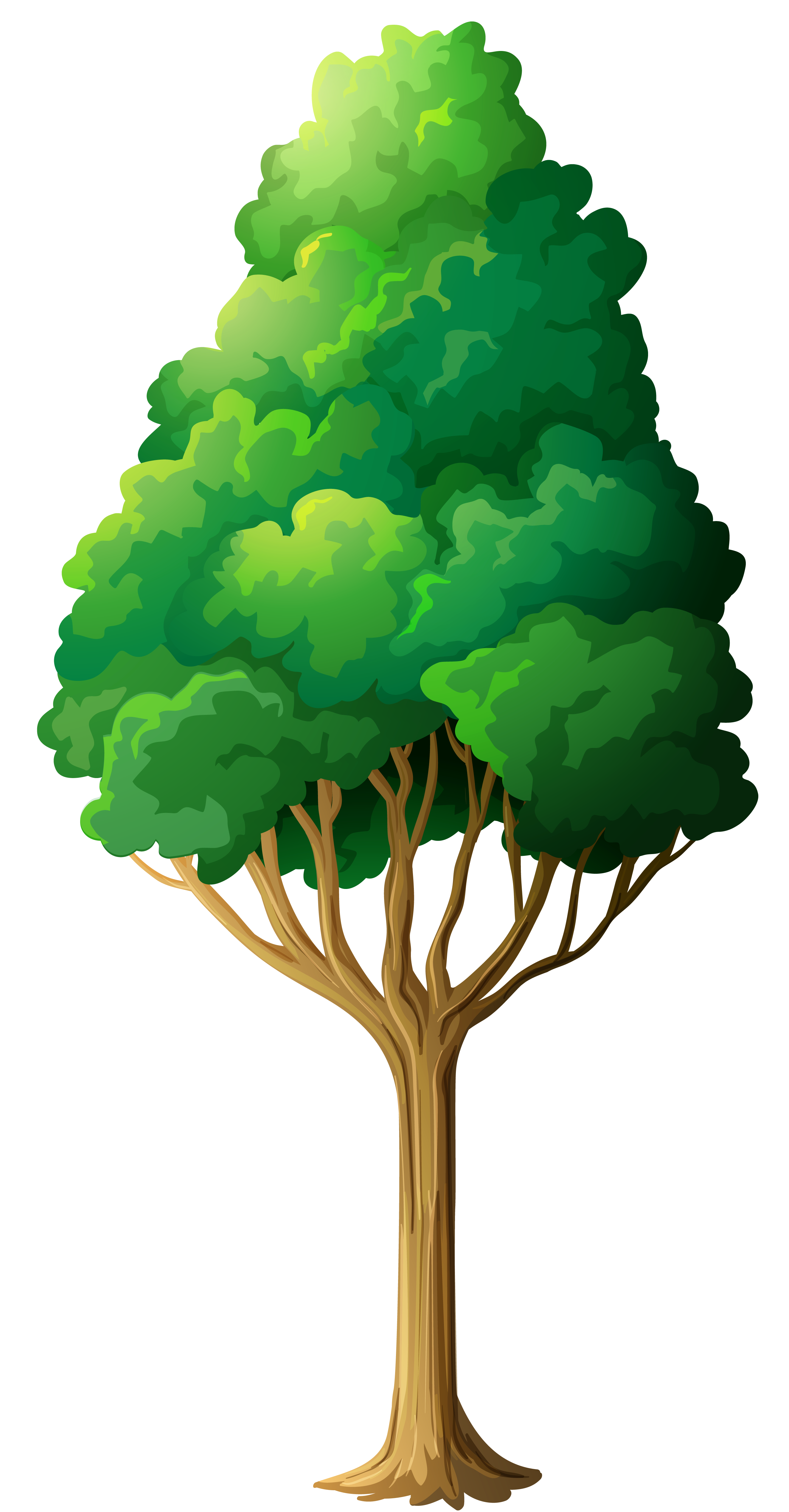 Cartoon trees png. Green tree clipart gallery