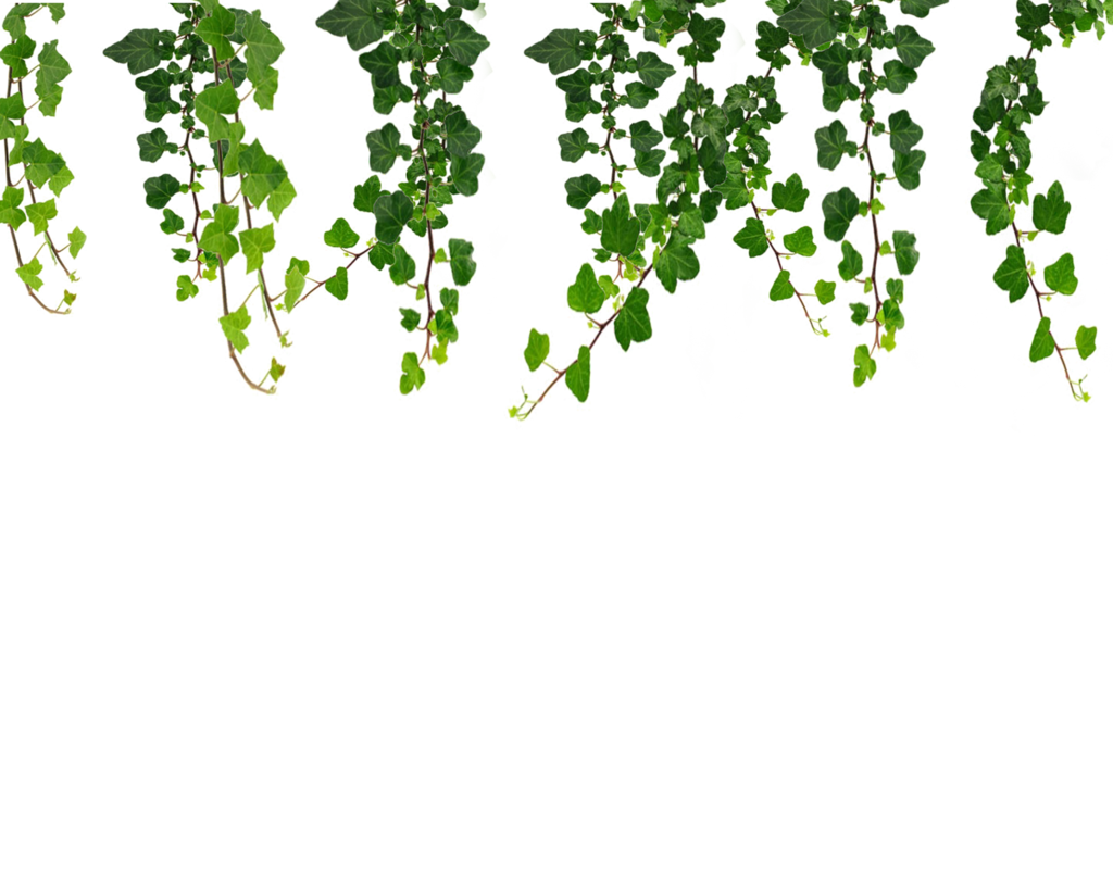 Jungle vine png. C f ccacf
