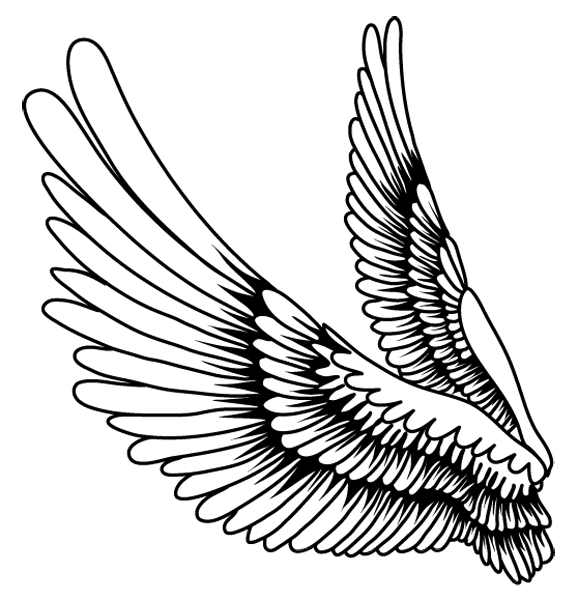 Cartoon wing png. Drawing bird feather creative