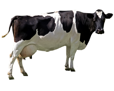 cash cow png