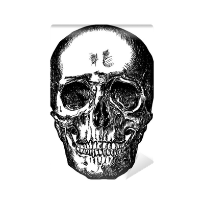 Drawing wall skull. Cursory on white background