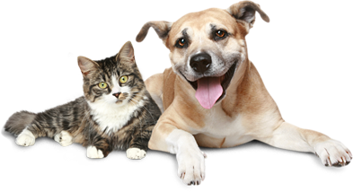 Cats and dogs png. Dancing cat dog clipart