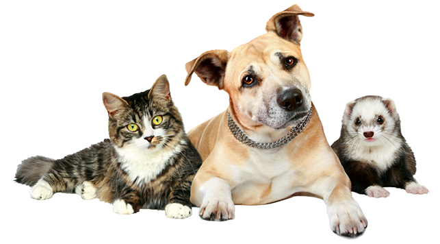Cats and dogs png. Young again pet food