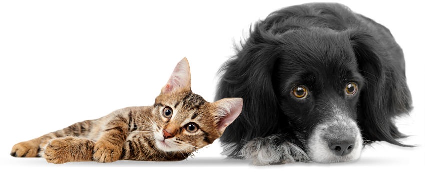 Cats in shelters png. And dogs hd transparent
