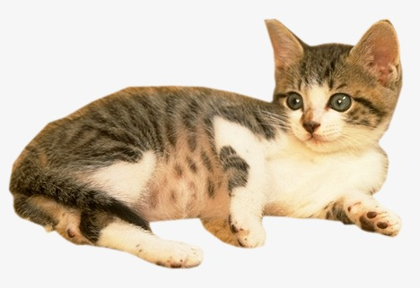 Kitty kitten photos png. Cat clip art real png transparent library