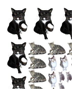Cat clip art real. Borders from photos cu