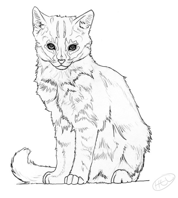 Kitten drawing at getdrawings. Cat clip art realistic clip library download