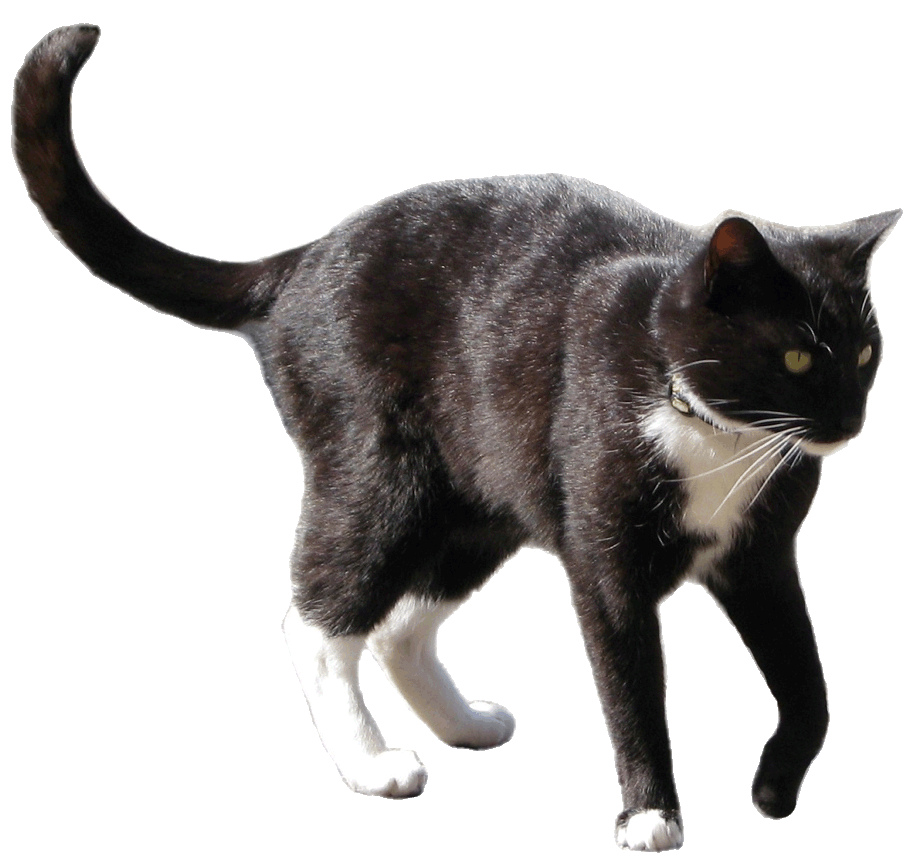 Black and white clipart. Cat clip art realistic picture transparent library