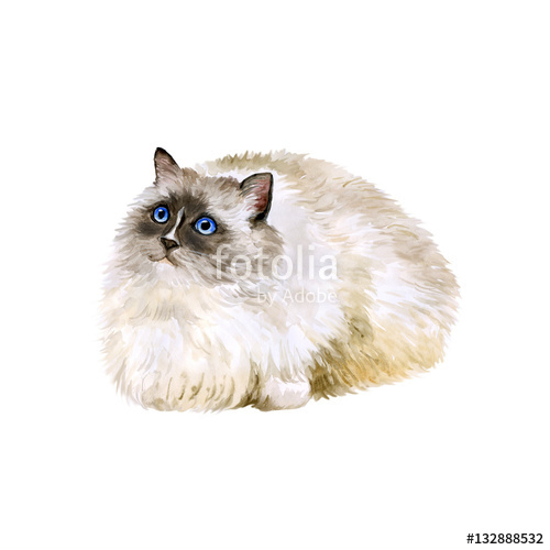 Cat clip art realistic. Watercolor portrait of american