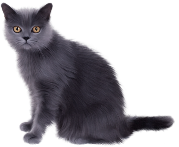 Cat clip art realistic. Clipart real pencil and