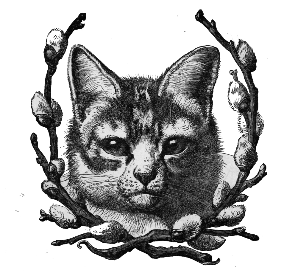 Cat clip art vintage. The moth meow