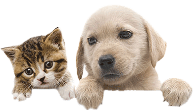 Cats and dogs png. Bow wow pet names
