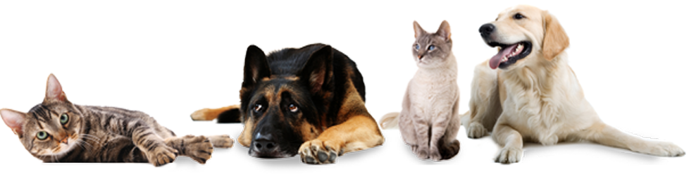 Cats and dogs png. Why you should spay
