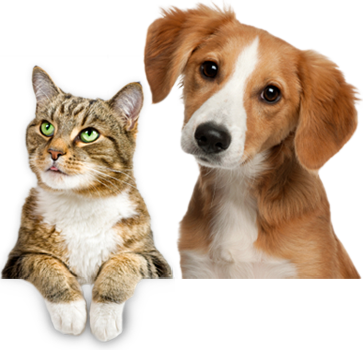 Cat dog png. Index of home m