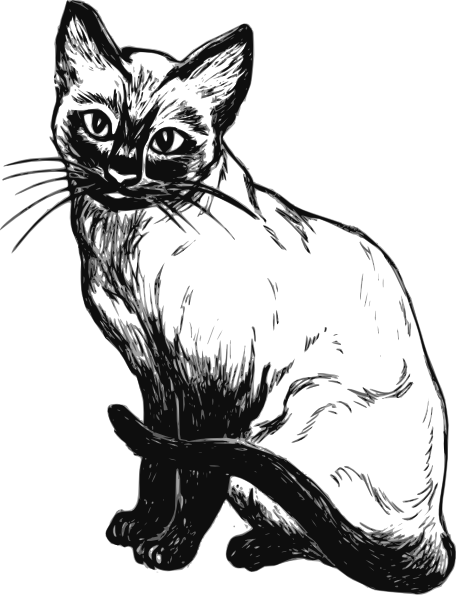 Cat drawing png. Siamese clip art at