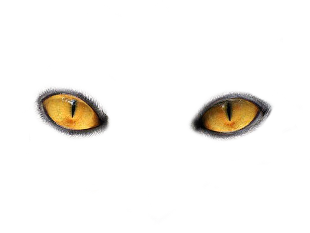 Cat eyes png. Cats by moonglowlilly on