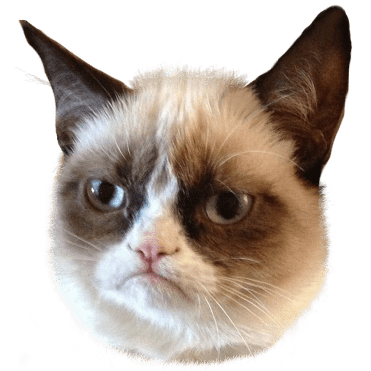 cat meme png