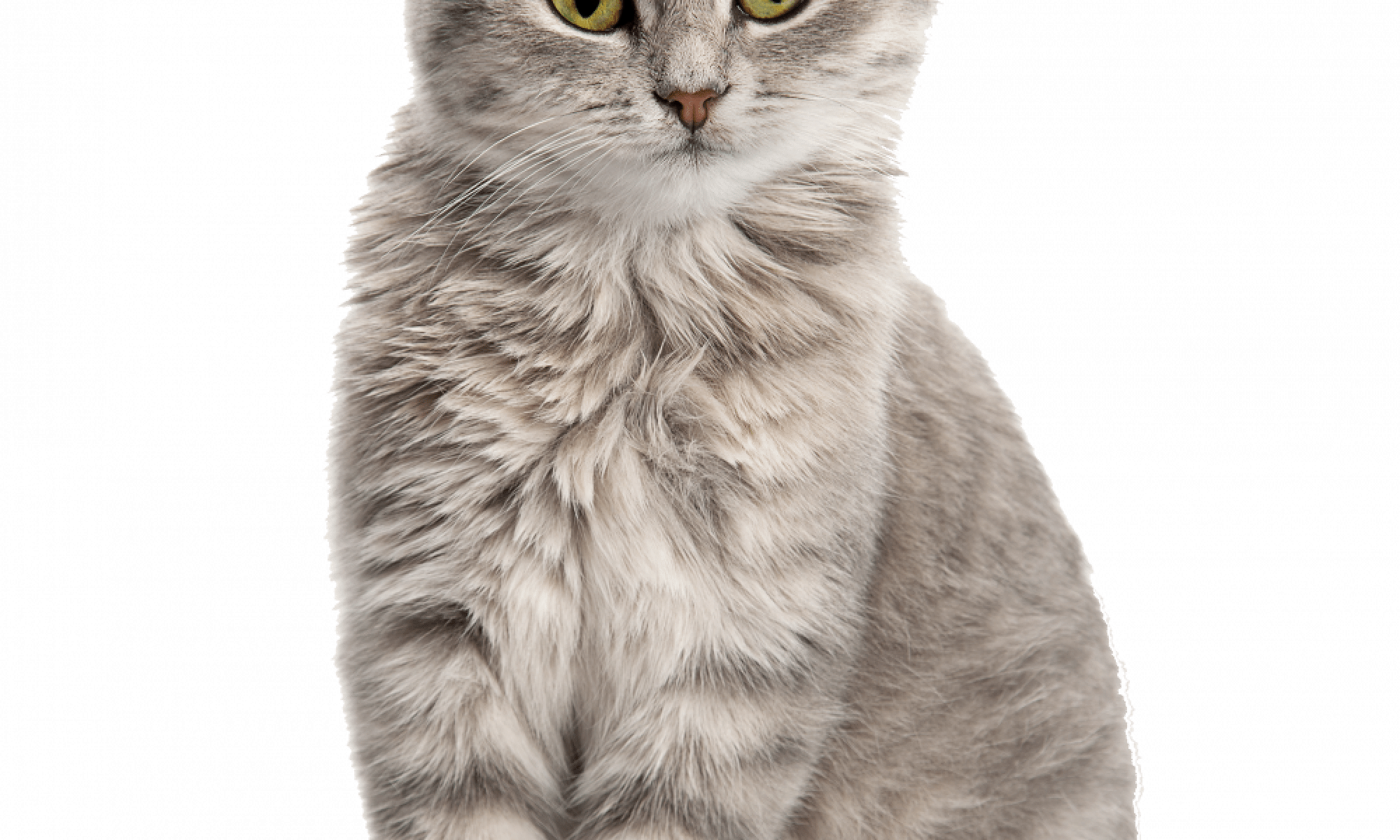 Communication what is your. Cat legs png graphic library download