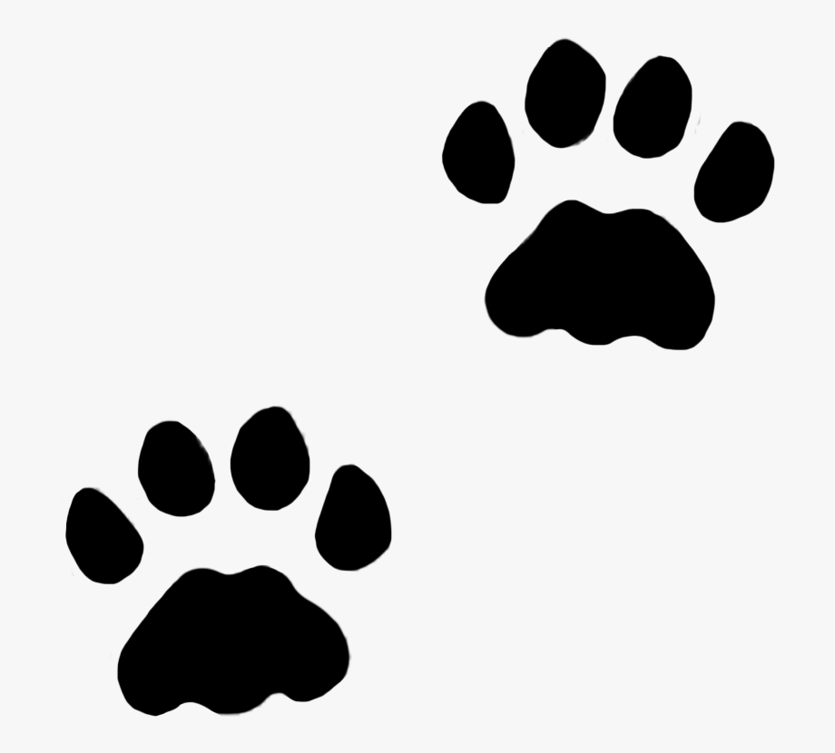 Cat paw. Dog paws in snow