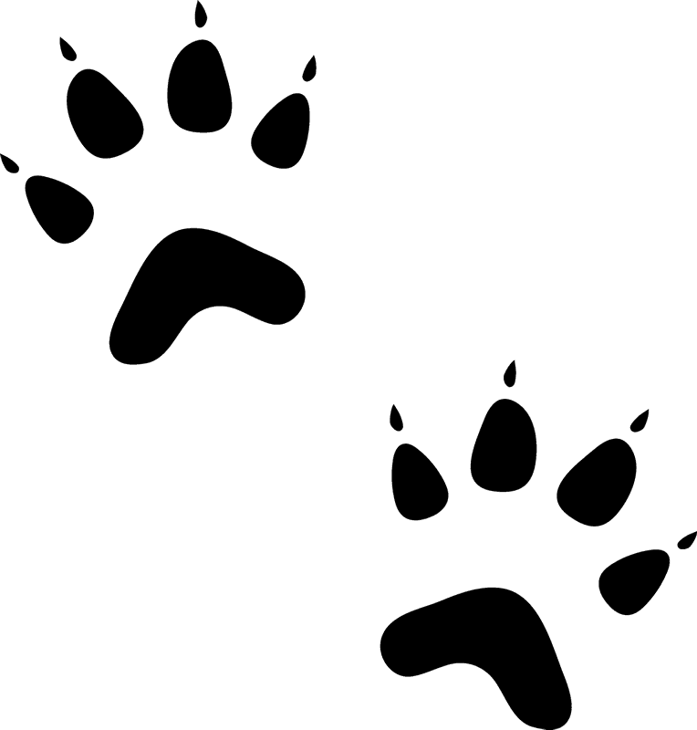 Cat paw prints png. Rubber stamp animal tracks