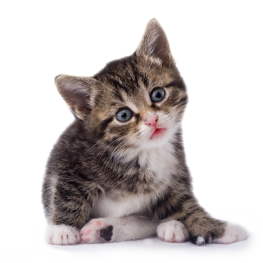 Cat png. Cats free images download
