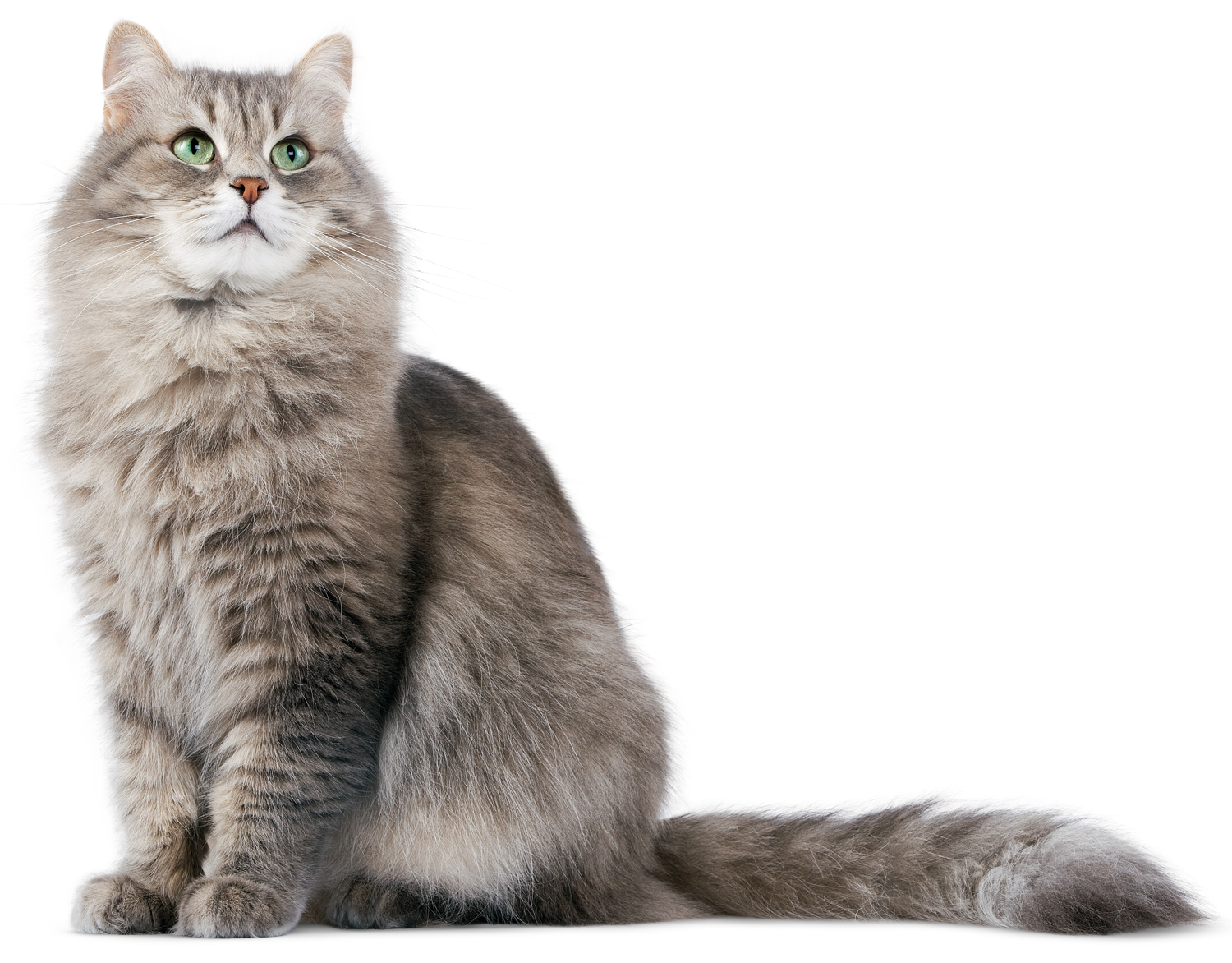 Hd mart. Cat png banner free stock