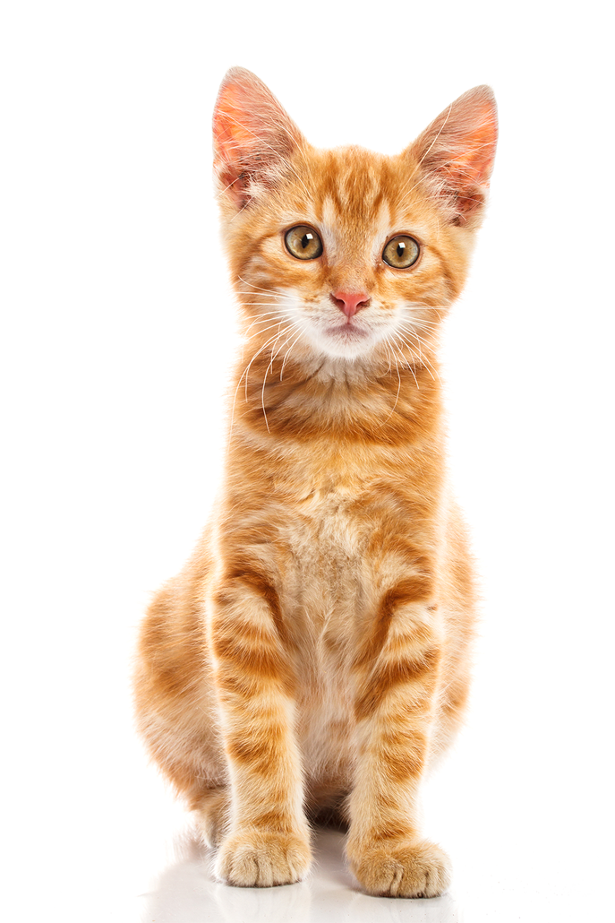Cat png. Transparent pictures free icons
