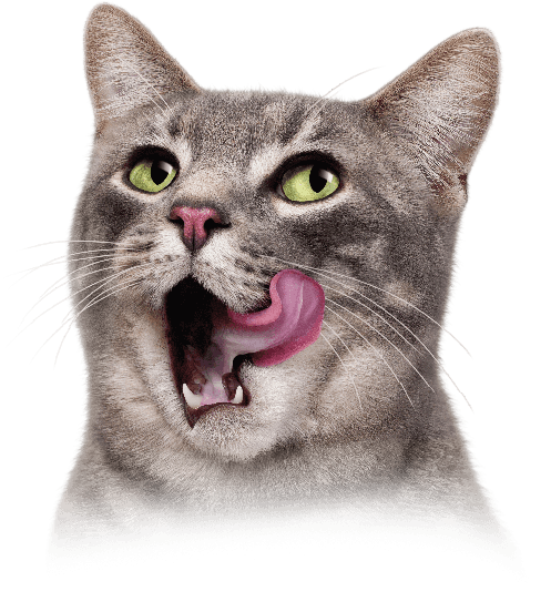funny cats png