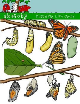 Caterpillar clipart butterfly cycle clipart. Life dpi color grayscale