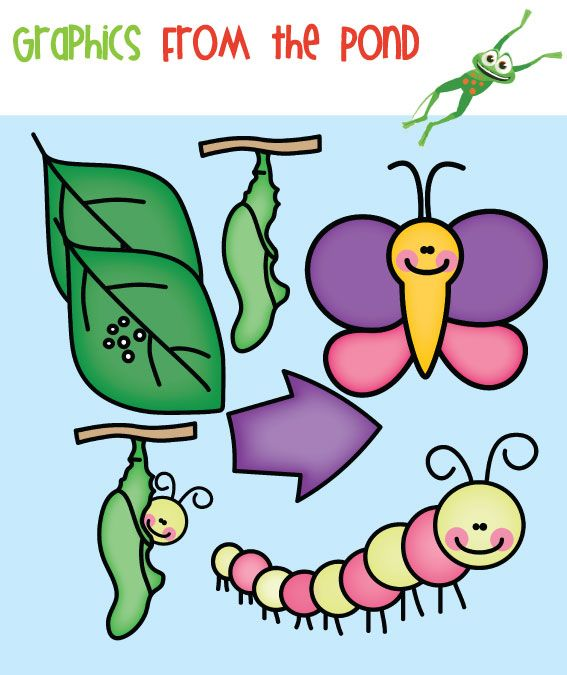 Caterpillar clipart butterfly cycle clipart. Life bw and color