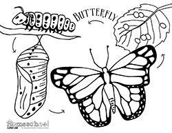 Caterpillar clipart butterfly cycle clipart. The best insect images